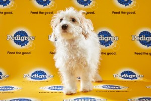 Toby Puppy Bowl 2016