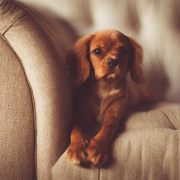 dog-friendly home