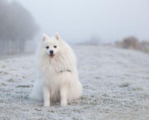 furry pets