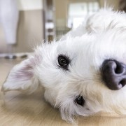What to Consider Before Moving Your Pet into a New House