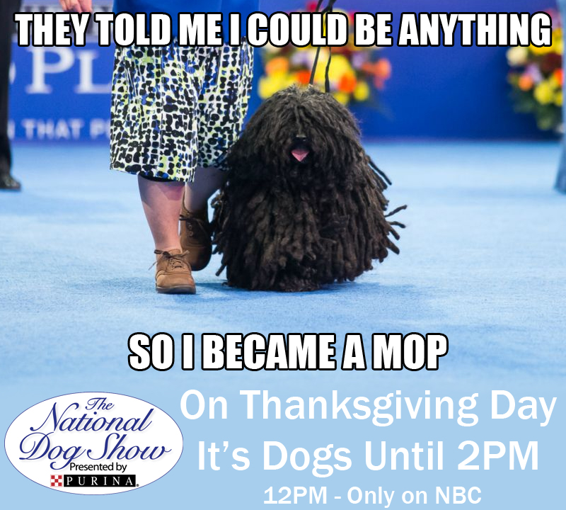 National Dog Show On After Macy S Parade