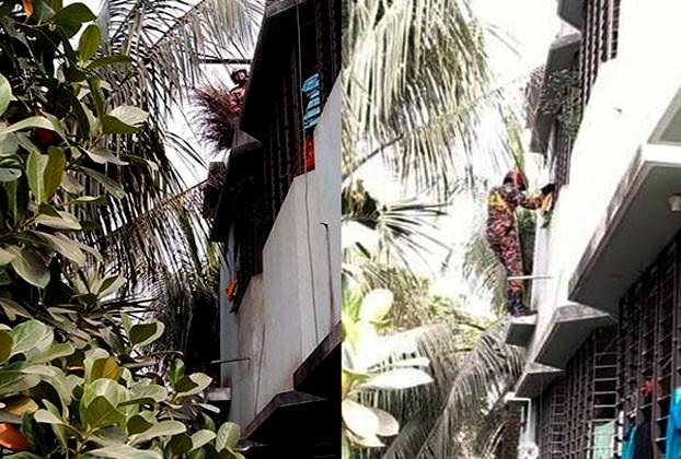 https://www.dhakaprotidin.com/wp-content/uploads/2021/01/Cat-Dhaka-Protidin-ঢাকা-প্রতিদিন.jpg