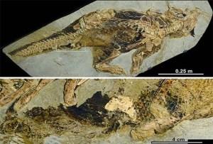 https://www.dhakaprotidin.com/wp-content/uploads/2021/01/Dinosaur-Dhaka-Protidin-ঢাকা-প্রতিদিন.jpg