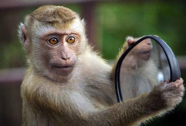 https://www.dhakaprotidin.com/wp-content/uploads/2021/02/Monkey-Dhaka-Protidin-ঢাকা-প্রতিদিন.jpg