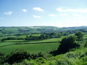 Rural Dorset