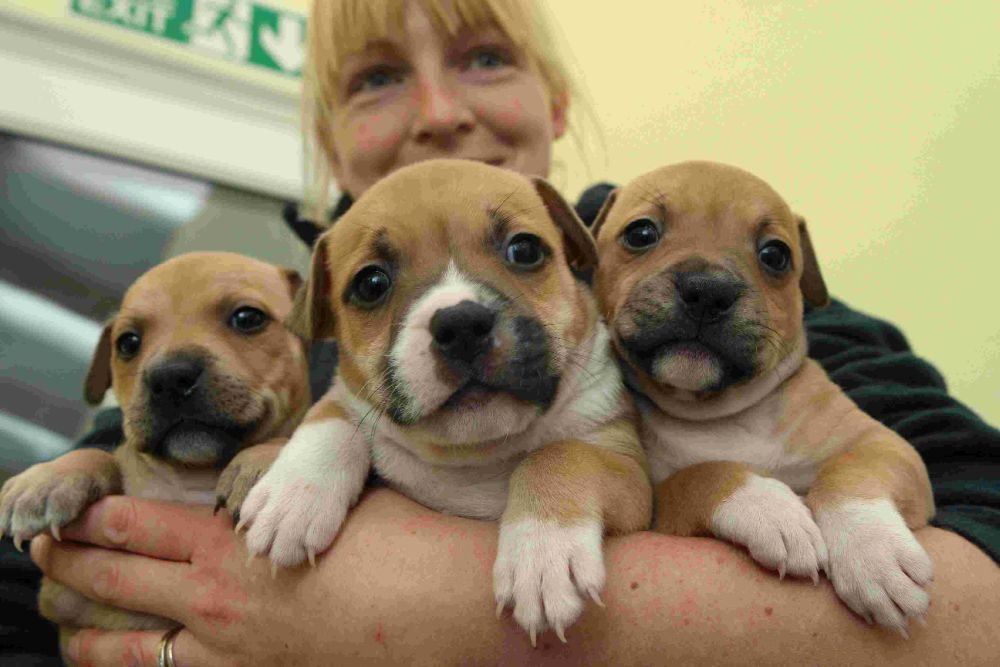 Weymouth Dog Rescue Centre