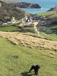 Luna enjoying Lulworth Cove