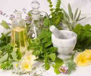 Planting Medicinal Plants In The Garden