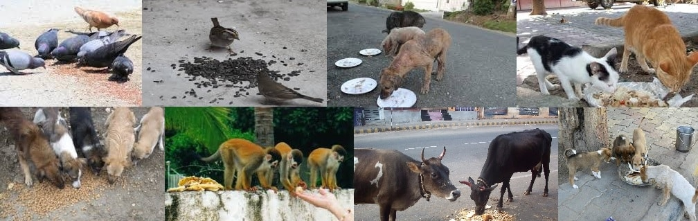 Feeding stray animals like birds, cats, cows. dogs, goats, monkeys. et cetera will earn you punya and will reduce your negative karma and doshas.
