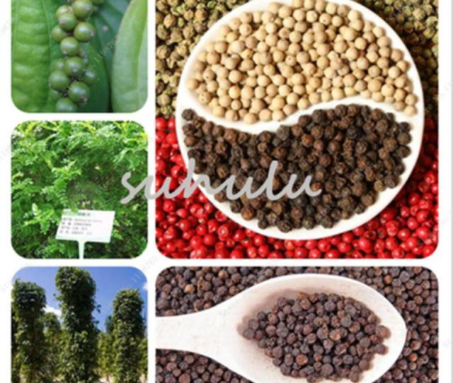 Groshandel Welten Seltene Gute Tasty Black Pepper Samen Einfach Wachsen Hausgarten Bonsai Non Gmo Gemusesamen Seltene Lecker Fur Kuche 100 Teile Beutel
