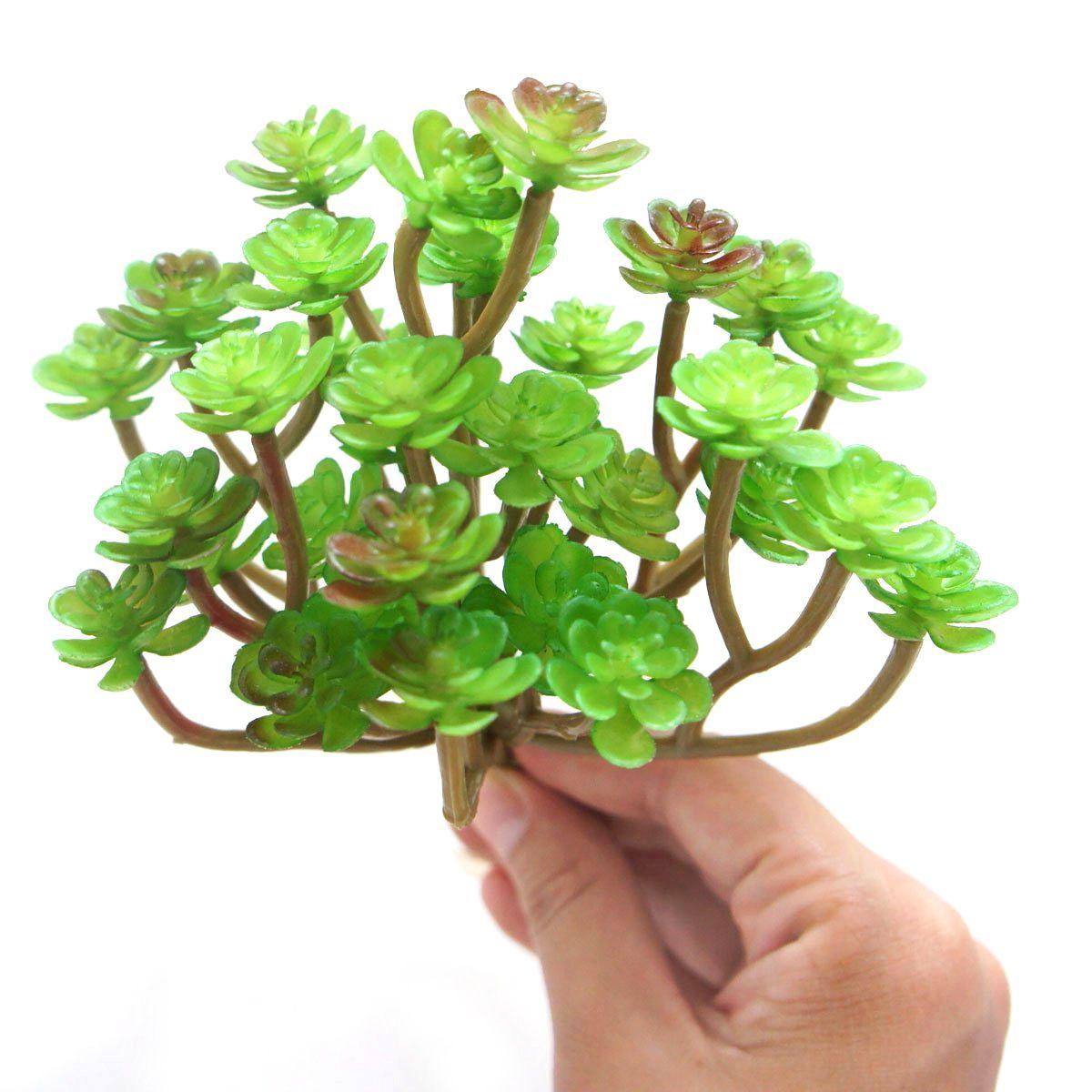 Kakteen Pflanzen Sukkulenten
