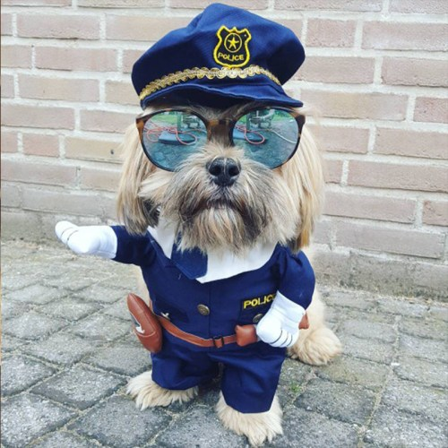 Top 10 Dog-Outfits