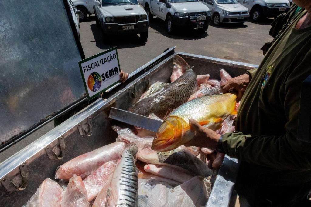 Pesca do dourado segue proibida em MT | Dia a Dia do Vale