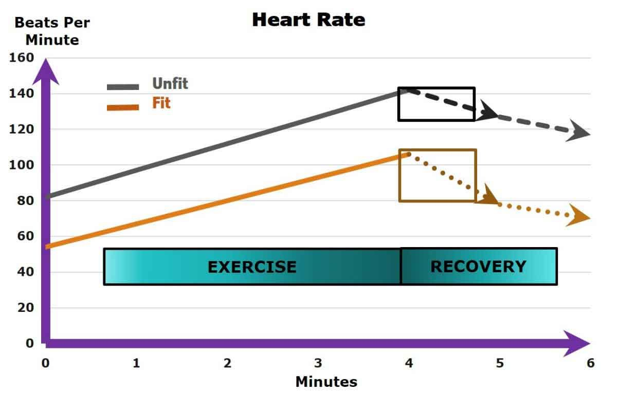 Diabetes Reversal And Improved Heart Rate Responses