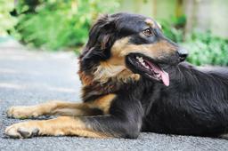 Diadema disponibilizará vacina antirrábica para cães e gatos neste domingo