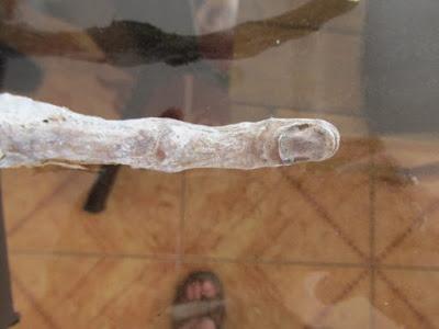 Το εξωγήινο χέρι με τρία δάχτυλα που βρέθηκε στο Περού (video)