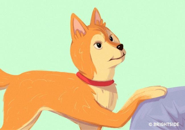 συμβουλές Σκύλος