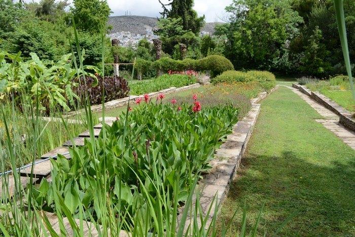 Ο μεγαλύτερος βοτανικός κήπος της ανατολικής Μεσογείου βρίσκεται στην Αθήνα. Και οι περισσότεροι δεν τον γνωρίζουν καν! - Εικόνα 17