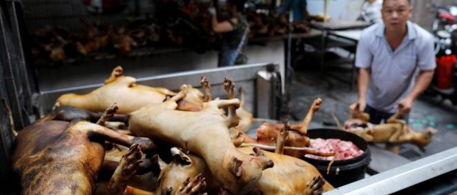 Dogs are sold in a Chinese market. (Reuters/Tyrone Siu)