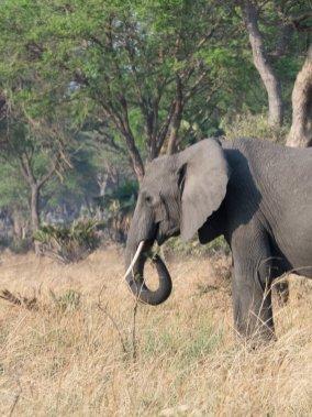 Elephant Katavi Tanzania