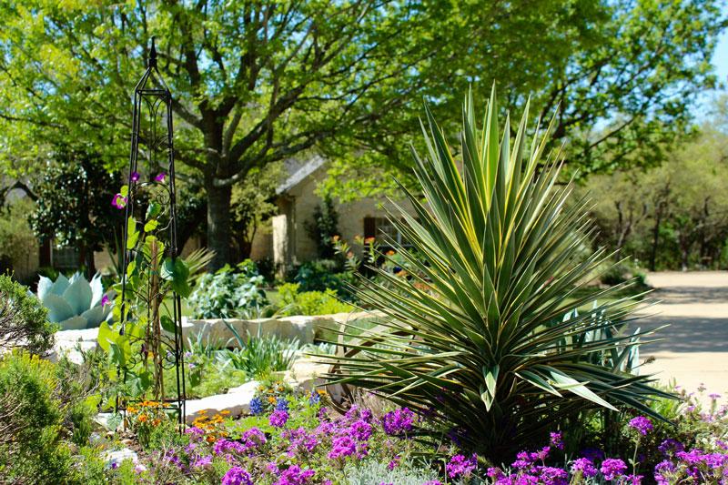 Gardening Archives Diana S Designs Austin