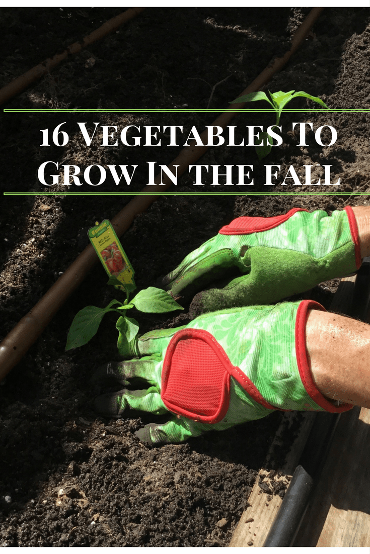 How_to_grow_vegetables_in_Florida