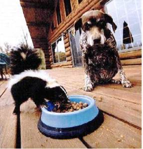Dog watching a skunk eat its food an example of patience and wisdom in well-being