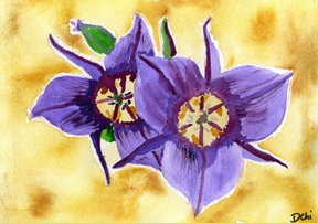 Your Inner Strength: Hope is like a mariposa lily– very strong