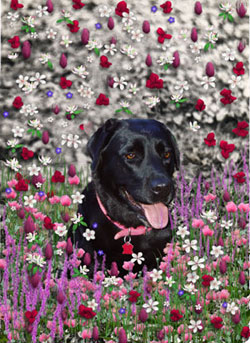 Abby in Flowers