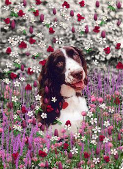 Lady in Flowers