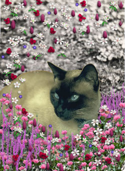 Stella in Flowers I