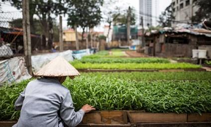 May '17 - Inner city farming in Hanoi