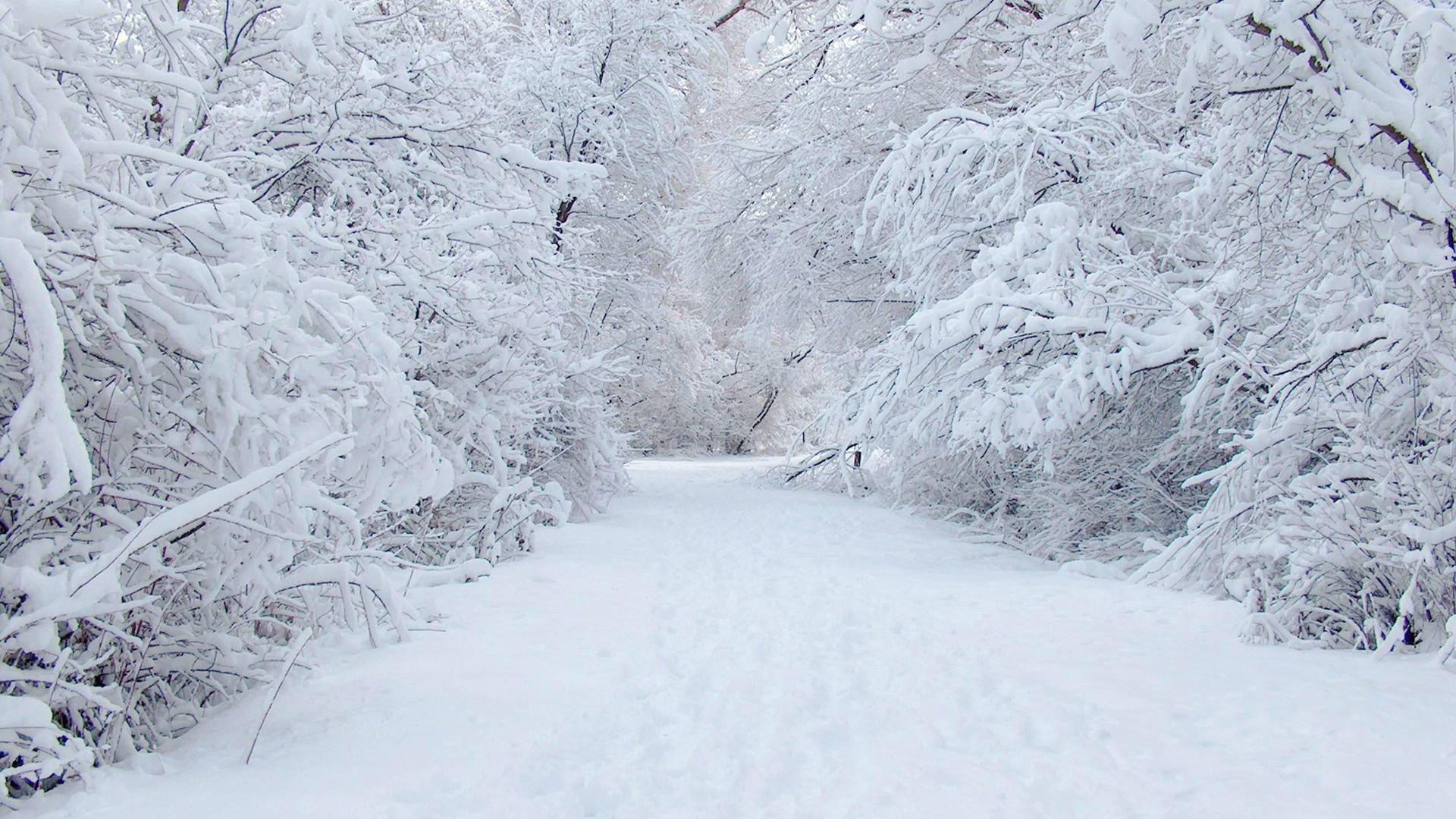 Snow Winter Wallpaper Hd