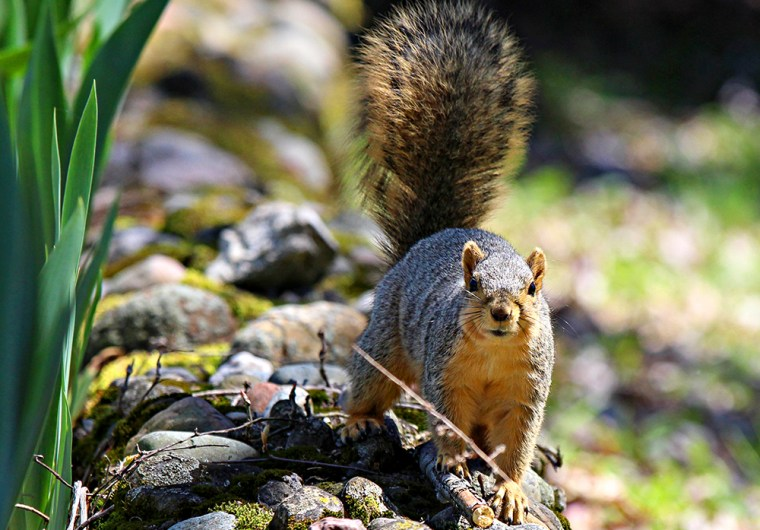 Photo of squirrel by Paul Beel, 2016.