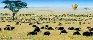 Migration - Safaris au Masaï Mara par avion de Diani