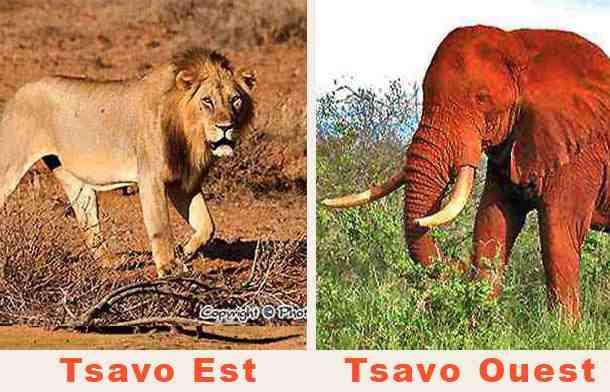 Safaris Tsavo Est et Ouest en Lodge