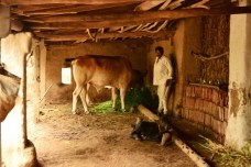 Shamjibhai who worries about his farmland