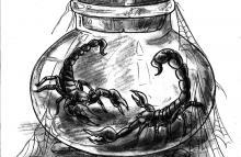scorpions-in-bottle