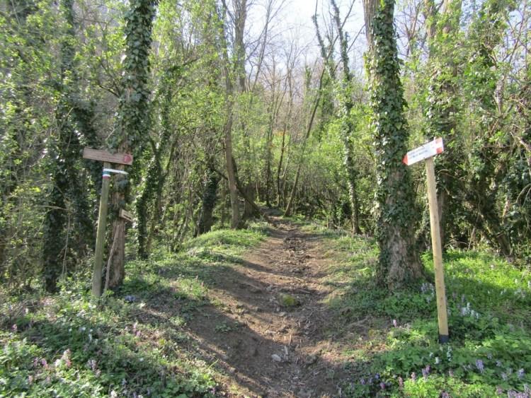 sentiero n 17 Monte della Madonna inizio