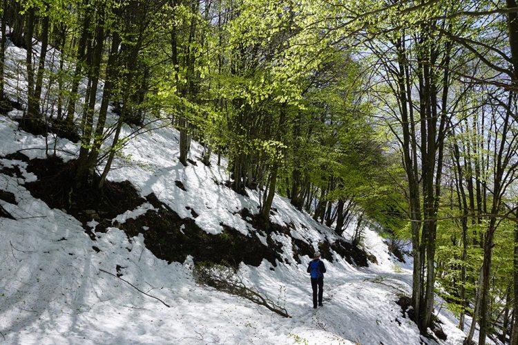 sentiero monte Zogo
