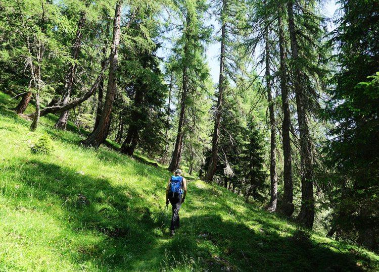 sentiero 317 Lagorai
