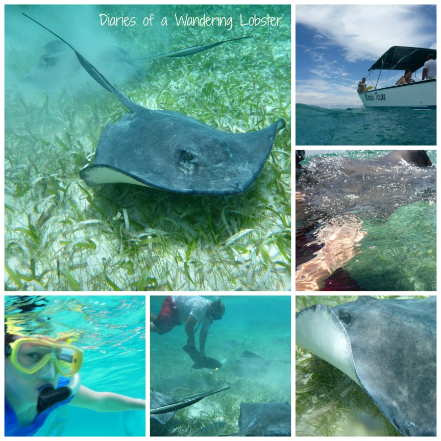 A collection of photos from Shark Ray Alley