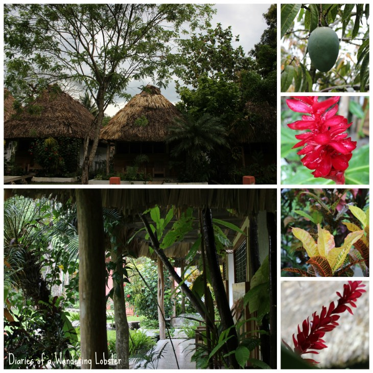 The local flora surrounding our bungalow