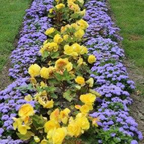 Flower gardens Newport, RI