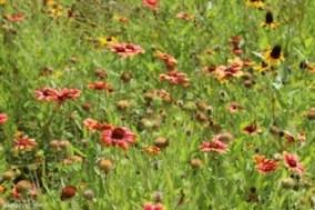 wildflowers new orleans
