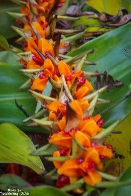Sao Miguel flowers