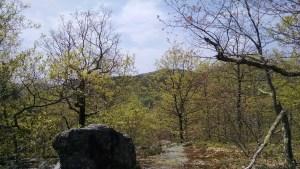 Burnt Meadow Trail