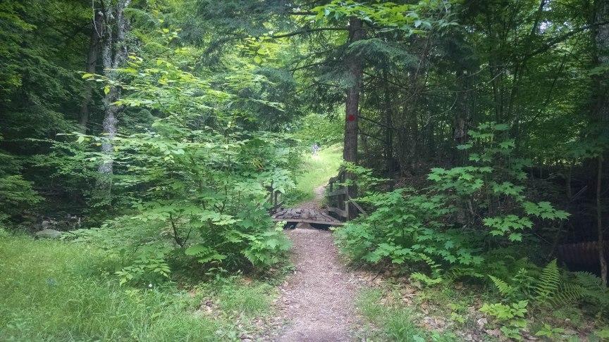 firswardens trail pleasant mountain
