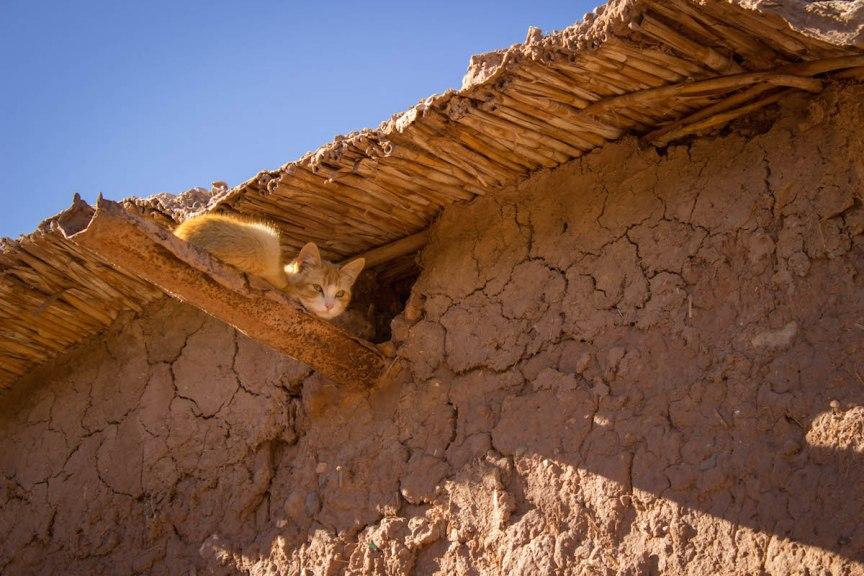 Kitten Morocco photos