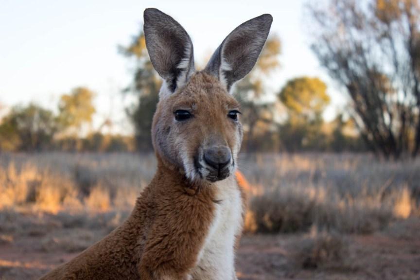 Holding Baby Kangaroos At The Kangaroo Sanctuary In Alice Springs - Kangaroo sanctuary alice springs